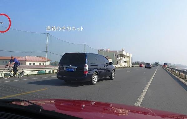 道路わきのネット.jpg